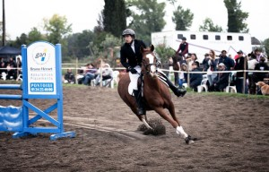 concours chevaux obstacle