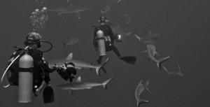 Yves et les requins