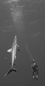 requin vertical