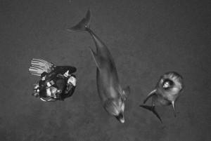 Stef et dauphins