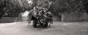 maldives-remorque-végétaux