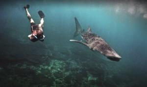 requin-baleine-et-plongeur